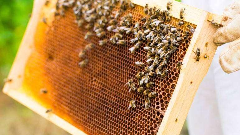 Spoznajte čebele